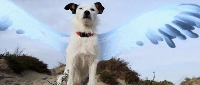 film still vliegend hond chayka met getekende vleugels
